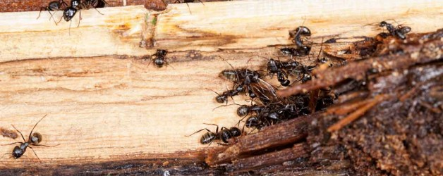 Watch Out For Insects in your Firewood!